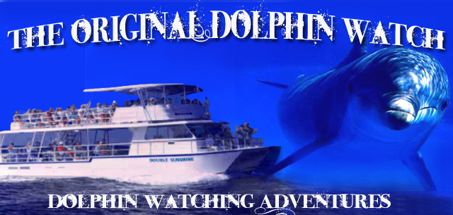 Dolphin Watch Headquarters - dolphin watching in South Padre Island Texas