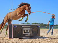 Extreme Mustang Makeover 2015 Fort Worth competitor Melia Gore and her BLM wild mustang Disco